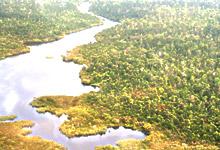 インドネシア天然林