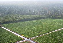 天然林と植林地の境界